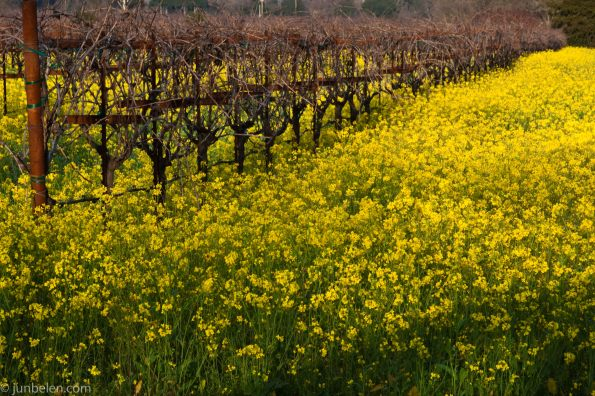 Vibrant Winter Colors in Napa Valley